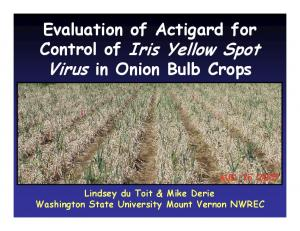 Evaluation of Actigard for Control of Iris Yellow Spot Virus in Onion Bulb Crops