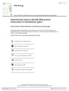 Experimental tools to identify RNA-protein interactions in Helicobacter pylori