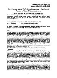 Field Demonstration of Trichoderma harzianum as a Plant Growth Promoter in Wheat (Triticum aestivum L)