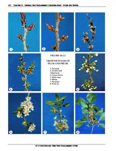 FIGURE GROWTH STAGES IN PLUM AND PRUNE