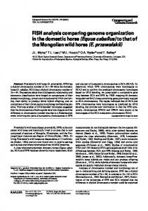 FISH analysis comparing genome organization in the domestic horse (Equus caballus) to that of the Mongolian wild horse (E