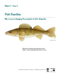 Fish Families. Chapter 2 Lesson 3. When it comes to classifying Minnesota fish, it s all in the families