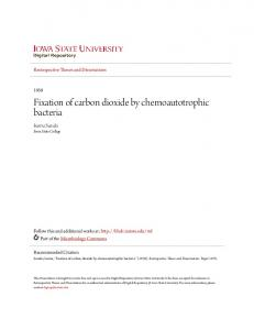 Fixation of carbon dioxide by chemoautotrophic bacteria