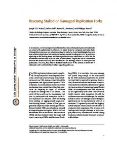 For DNA replication to be accurately completed,
