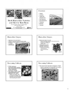 Fresh Muscadine Varieties and How to Train Them