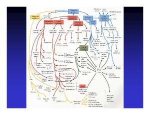 Gastrointestinal Tract Development
