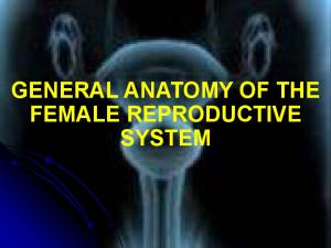 GENERAL ANATOMY OF THE FEMALE REPRODUCTIVE SYSTEM