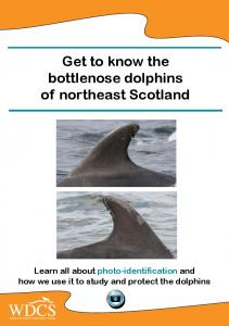 Get to know the bottlenose dolphins of northeast Scotland Learn all about photo-identification and how we use it to study and protect the dolphins