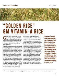 Golden Rice GM Vitamin-A Rice Golden Rice is the name of a rice that