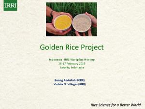 Golden Rice Project. Indonesia - IRRI Workplan Meeting February 2015 Jakarta, Indonesia. Buang Abdullah (ICRR) Violeta N