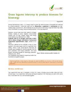Grass legume intercrop to produce biomass for bioenergy