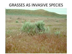 GRASSES AS INVASIVE SPECIES