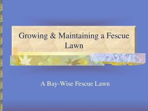 Growing & Maintaining a Fescue Lawn. A Bay-Wise Fescue Lawn