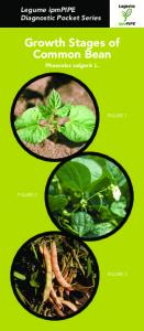 Growth Stages of Common Bean