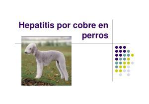 Hepatitis por cobre en perros