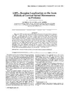Hillock of Cervical Spinal Motoneurons