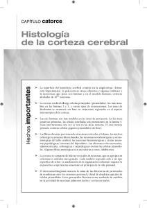 Histología de la corteza cerebral