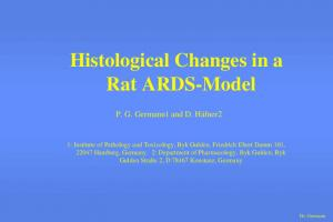 Histological Changes in a Rat ARDS-Model