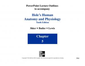 Hole s Human Anatomy and Physiology Tenth Edition. Chapter 5