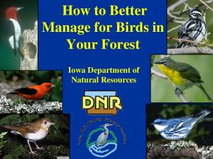 How to Better Manage for Birds in Your Forest. Iowa Department of Natural Resources