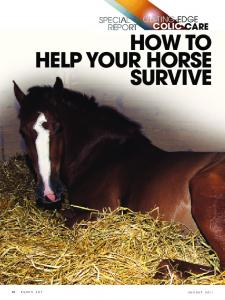 HOW TO HELP YOUR HORSE SURVIVE