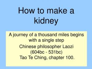 How to make a kidney