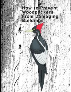 How to Prevent Woodpeckers From Damaging Buildings