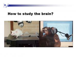 How to study the brain?