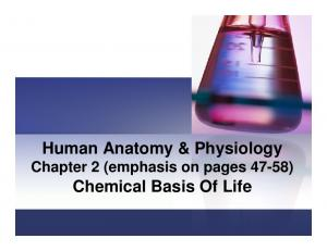 Human Anatomy & Physiology Chapter 2 (emphasis on pages 47-58) Chemical Basis Of Life