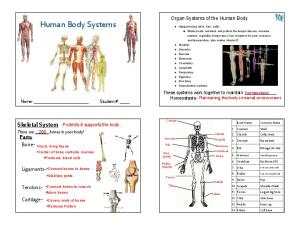 Human Body Systems. Skeletal System. Parts: Organ Systems of the Human Body. Homeostasis- Maintaining the body s internal environment