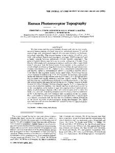 Human Photoreceptor Topography