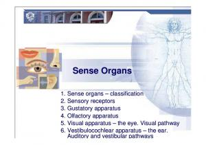Human sense organs. Five Senses Icons. Sense organs. five senses: specialized cells receptors for specific stimuli: touch taste smell sight hearing