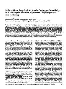 IAR4, a Gene Required for Auxin Conjugate Sensitivity in Arabidopsis, Encodes a Pyruvate Dehydrogenase E1a Homolog 1
