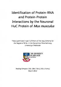 Identification of Protein-RNA and Protein-Protein Interactions by the Neuronal HuC Protein of Mus musculus