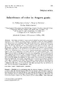 Inheritance of color in Angora goats