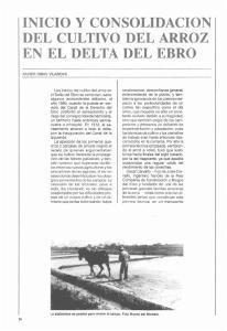 INICIO Y CONSOLIDACION DEL CULTIVO DEL ARROZ EN EL DELTA DEL EBRO