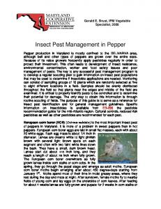 Insect Pest Management in Pepper