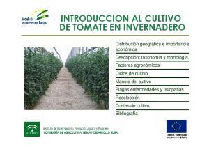 INTRODUCCION AL CULTIVO DE TOMATE EN INVERNADERO