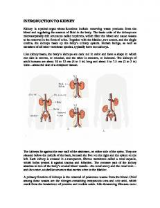INTRODUCTION TO KIDNEY