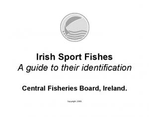 Irish Sport Fishes A guide to their identification