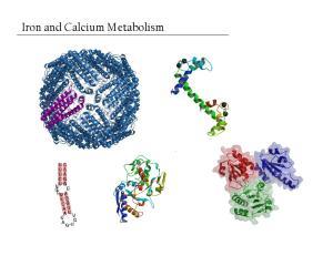 Iron and Calcium Metabolism