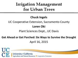 Irrigation Management for Urban Trees