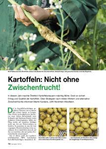 Kartoffeln: Nicht ohne Zwischenfrucht!