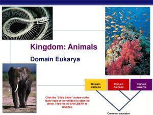 Kingdom: Animals. Domain Archaea. Domain Eukarya. Domain Bacteria