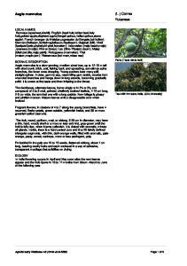 (L.) Correa Rutaceae. Aegle marmelos