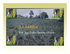 LA SABILA Aloe vera,barbadensis