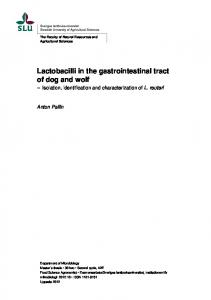 Lactobacilli in the gastrointestinal tract of dog and wolf