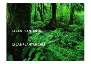 LAS PLANTAS C4 LAS PLANTAS CAM