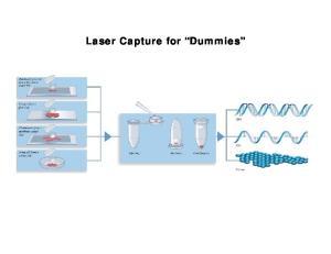Laser Capture for Dummies