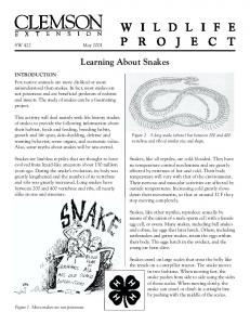 Learning About Snakes